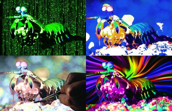Kapiga Colour Schemes